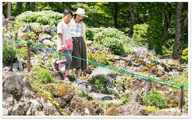 "The alpine plant garden, ""Alp no Sato"" (Alp's village) image"